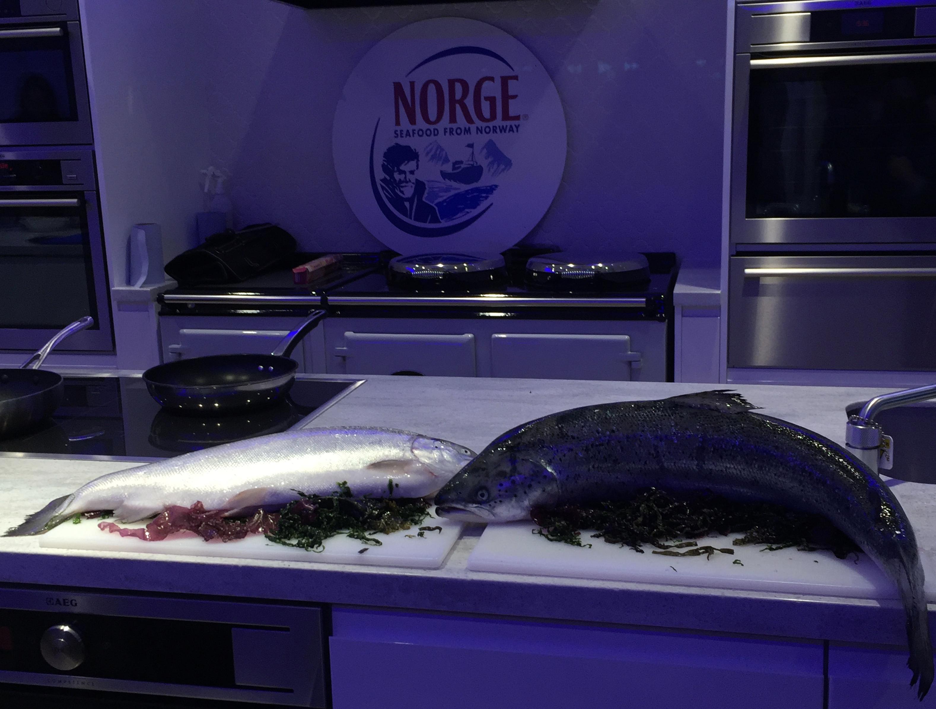 unique fjord trout Lunchbox World